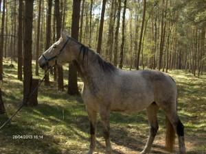 Pferd - Reverie im Wald - naprimo.de