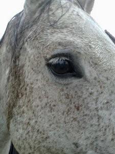 Reverie - ich bin ein glückliches, gesundes Pferd